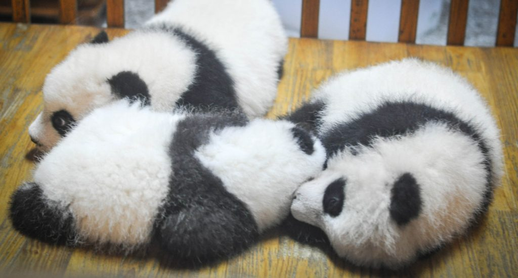 Sanction Google Panda
